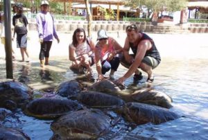 water sport di bali
